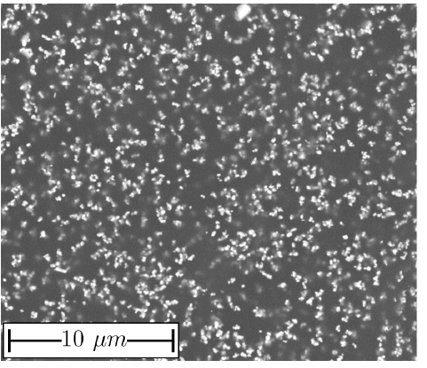 FIG. 2. SEM picture of an SEC.