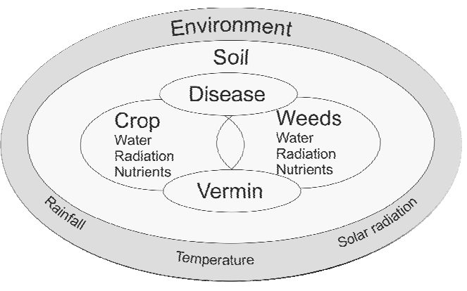 Figure 1. Schematics of the components related to the crop growth model.
