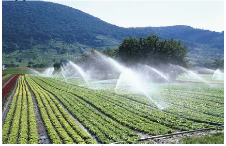 Figure 2 Sprinkler System Irrigation