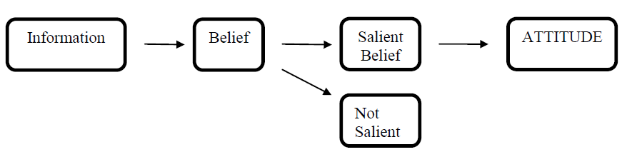 Figure 2: Formation of beliefs and of attitudes