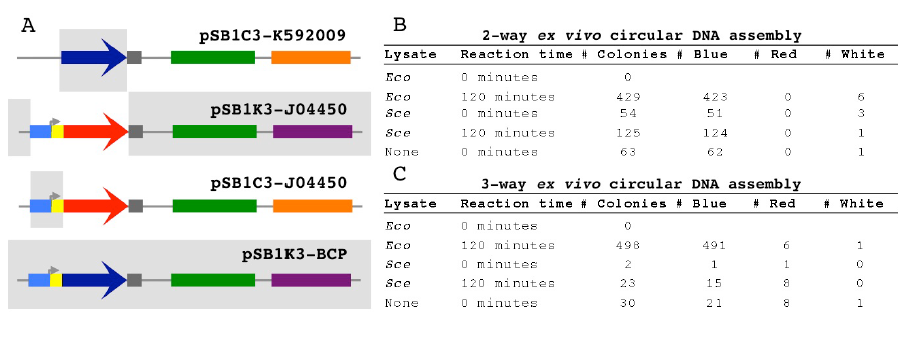 Figure 2.3 The 3-way Assembly and Colony Counts