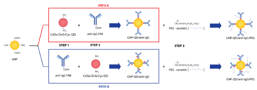 Figure 3-3. Schematic of GNP modifications. Modification paths of 90 bloom-based GNP