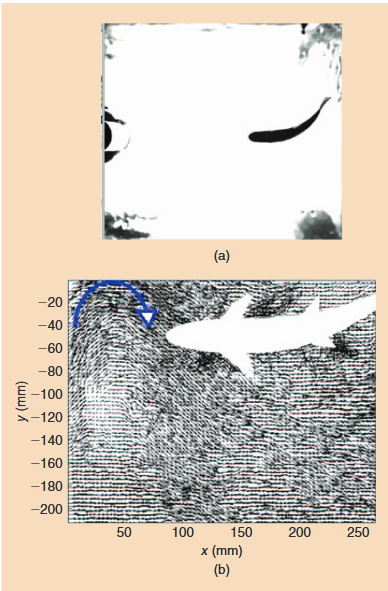 Figure 1. (a) A snapshot of a high-speed overview camera used to detect fish motion in a Kármán vortex street (KVS). A cylinder, partially visible on the left edge, is used to create periodic turbulence. (b) A DPIV image of the flow around a fish postprocessed to obtain the velocity vector field around the fish. The blue arrow indicates a vortex approaching the fish.