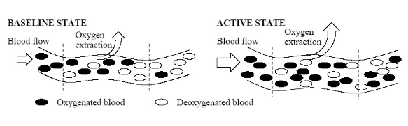 Figure 3.3: Neural activity increases the blood flow in the active region to provide the neurons with more oxygen