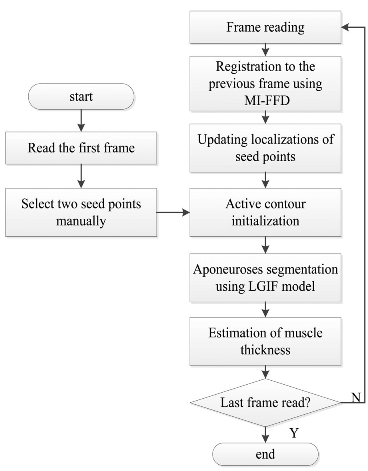 Fig. 1. Flowchart of the proposed strategy to measure GM thickness from one ultrasound image sequence. (MI-FFD for mutual information-based free-form deformation; LGIF for local and global intensity fitting.)