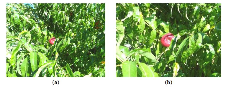 Figure 6. Orchard image (320 × 240 pixels, RGB565) obtained in normal